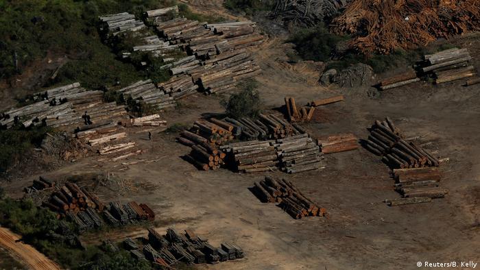 Muchas empresas y madereros ilegales están derribando los árboles de enormes áreas para cultivar soja o para la cría de ganado. Otra razón de la deforestación son las grandes represas o proyectos mineros. El mayor porcentaje de deforestación tiene lugar en áreas protegidas.