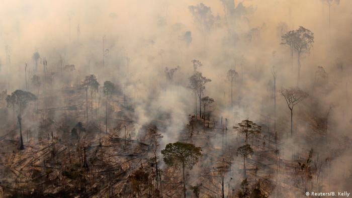 Brazil's forests are threated by deforestation and logging