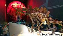 Großbritannien Natural History Museum in London