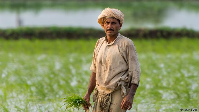 Pakistan Multan Mann im Reisfeld