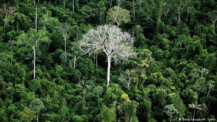 Governo manteve extinção da reserva em novo decreto