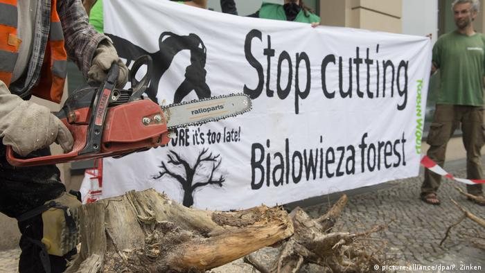Protest against deforestation in Bialowieza forest in Berlin (picture-alliance/dpa/P. Zinken)