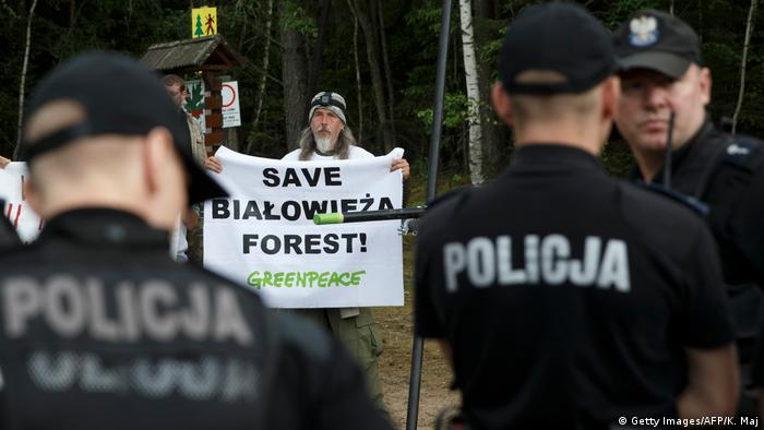 Greenpeace activists protest cutting the trees of the Bialowieza forest during a protest in Czerlonka, Poland, on June 8, 2017 (Getty Images/AFP/K. Maj)