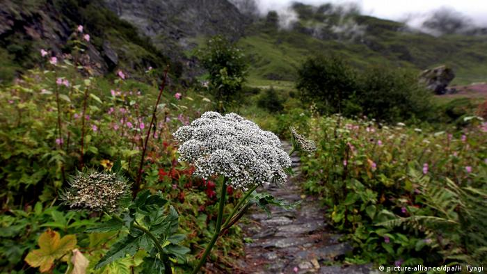 Indien Valley of Flowers National Park (picture-alliance/dpa/H. Tyagi)
