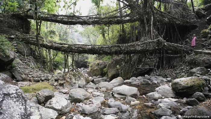 Indien Living Root Bridge Cherrapunji Meghalaya (Imago/Indiapicture)