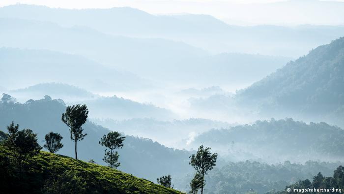 Indien Teeplantagen in Munnar, Kerala (Imago/robertharding)