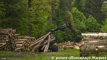BIALOWIEZA, POLAND - MAY 26: A forwarder full of f tree trunks is seen during a large scale logging taking place at Bialowieza forest, an Unesco natural world heritage site, in Bialowieza, Poland on May 26, 2017. Omar Marques / Anadolu Agency   Keine Weitergabe an Wiederverkäufer.