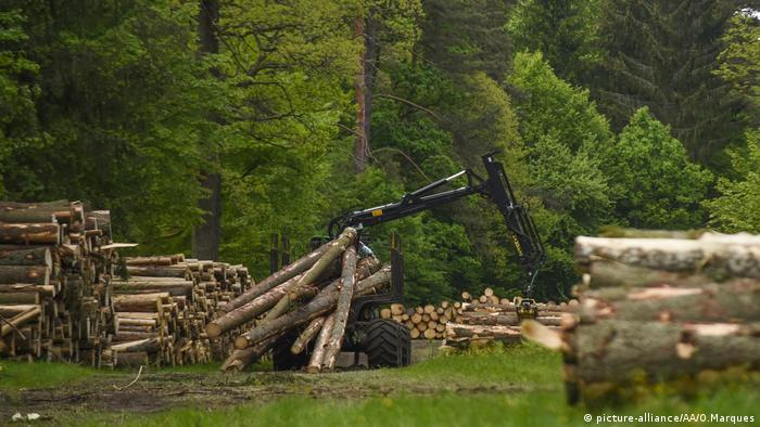 Wood harvester in Bialowieza forest (picture-alliance/AA/O.Marques)