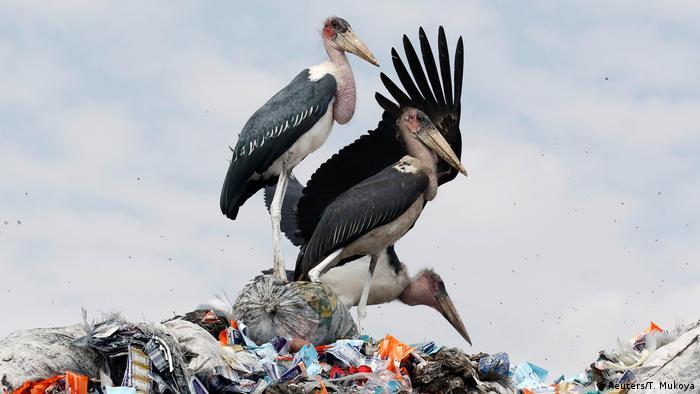 5. Bildergalerie Kenia Mülldeponie bei Nairobi (Reuters/T. Mukoya)