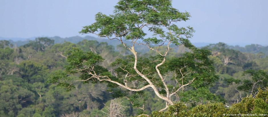 Brasil chega à COP23 com um dado positivo: desmatamento caiu 16% entre agosto de 2016 e julho de 2017