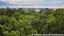 Amazon rainforest in Equador
