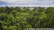 Ecuador Amazonas Regenwald