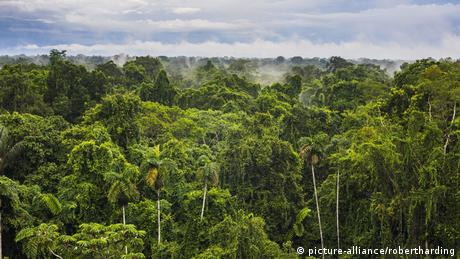 Rainforest in the Amazon Basin in Ecuador. (picture-alliance/robertharding)