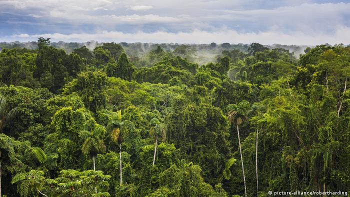 An aerial view of the Amazon rainforest