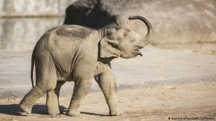 BdT   Elefanten-Nachwuchs im Kölner Zoo