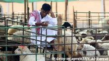 August 30, 2017*** A livestock vendor uses his cell phone while waiting for customers at a livestock market in Kuwait City on August 30, 2017 ahead of the Muslim holiday of Eid al-Adha, the Feast of Sacrifice, which marks the end of the annual pilgrimage or Hajj to the Saudi holy city of Mecca and is celebrated in remembrance of Abraham's readiness to sacrifice his son to God. Cows, camels, goats and sheep are traditionally slaughtered during this religious occasion. / AFP PHOTO / Yasser Al-Zayyat (Photo credit should read YASSER AL-ZAYYAT/AFP/Getty Images)