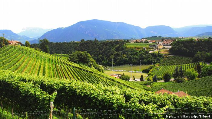 Vineyards grace the hills of South Tyrol (picture-alliance/dpa/B.Tuerk)