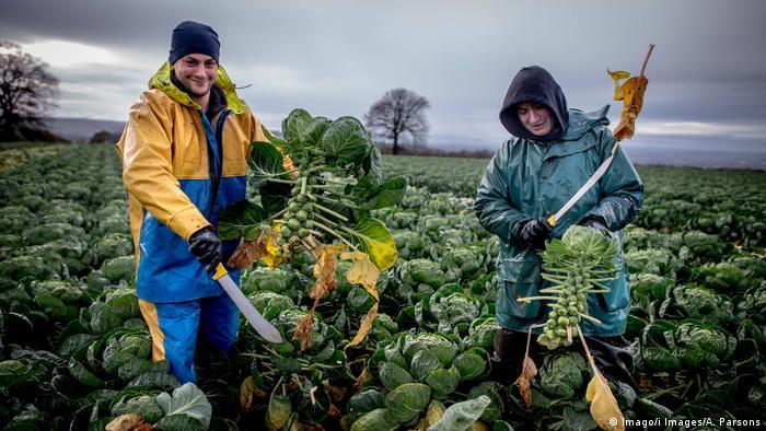Großbritannien Feldarbeiter aus Osteuropa