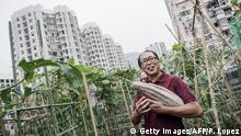 ARCHIV 2012 +++ To go with AFP story HongKong-farm-environment,FEATURE by Sam Reeves This picture taken on July 31, 2012 shows Osbert Lam (front), the owner of City Farm, holding a pumpkin he just harvested at his organic farm set up on the rooftop of a tower block building in Hong Kong. It is one of several such sites that have sprung up in Hong Kong's concrete jungle, as the appetite for organic produce grows and people seek ways to escape one of the most densely populated places on earth. AFP PHOTO / Philippe Lopez (Photo credit should read PHILIPPE LOPEZ/AFP/GettyImages)