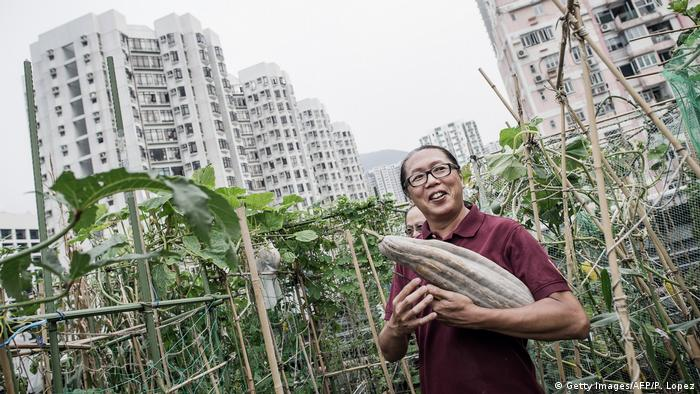 A man holding a vegetable in a rooftop garden (Getty Images/AFP/P. Lopez)