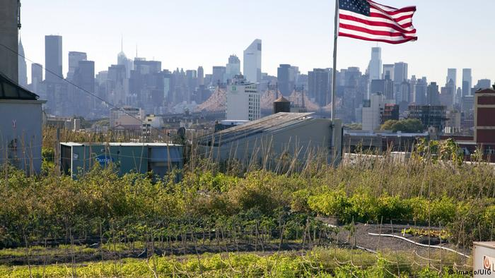 Brooklyn Grange rooftop garden in New York City. Photo credit: Imago/UIG.