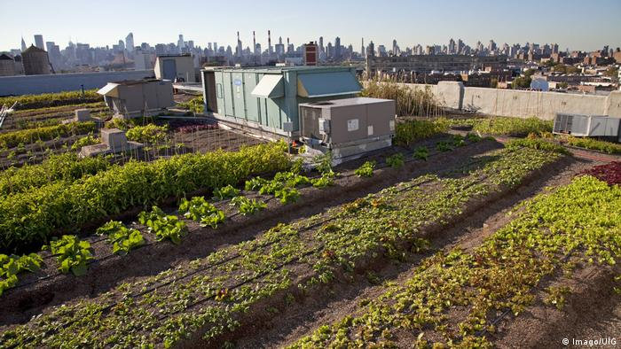 Brooklyn Grange rooftop garden. Photo credit: Imago/UIG.