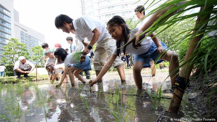 Planting rice on a rooftop garden in Tokyo, Japan. Photo credit: Imago/AFLO/Yoshio Tsunoda.