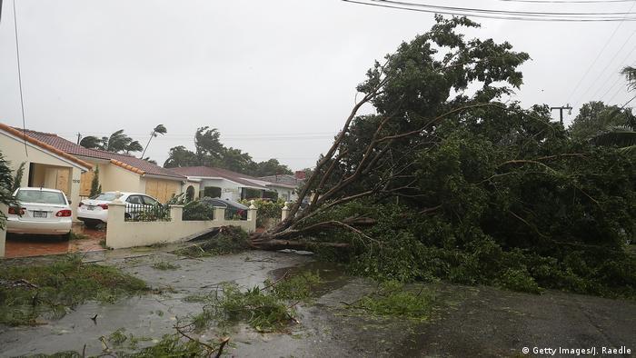 Fortes ventos do furacão derrubaram árvores em Miami