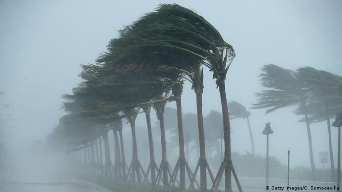 A row of palm trees blowing hard in the wind