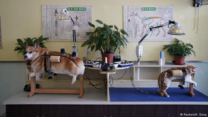 China Akupunktur für Katzen und Hunde (Reuters/A. Song)