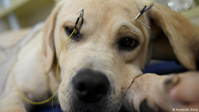 China Akupunktur für Katzen und Hunde