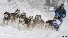 Ein Teilnehmer des internationalen Schlittenhunderennens faehrt mit seinen acht Hunden am Samstag, 21. Februar 2009 in Inzell ueber die frisch verschneite Strecke. (AP Photo/Uwe Lein) ---A musher and his eight dogs are seen on the track during an international dog sledding at Inzell, southern Germany on Saturday, Feb. 21, 2009. (AP Photo/Uwe Lein)