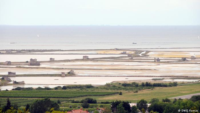 Piranski zaljev - i kad more miruje, ne miruju strasti