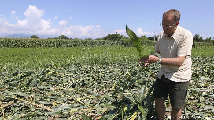 Italien Pordenone - Giorgio Fidenato mit genetisch verändertem Mais