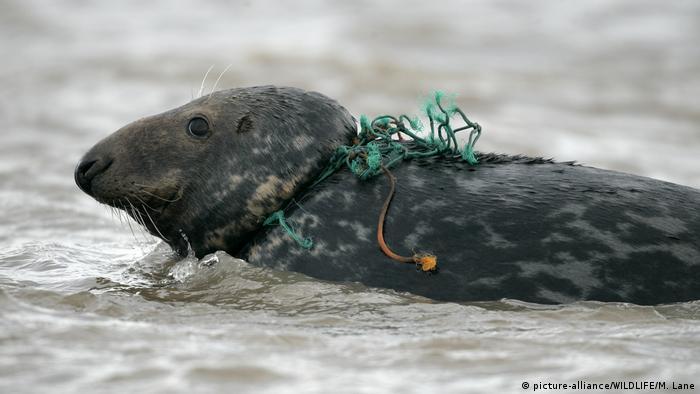 Plastikmüll in der Nordsee