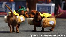 USA Oktoberfest Zinzinnati in Cincinnati Ohio Wiener Dog's Race 2013