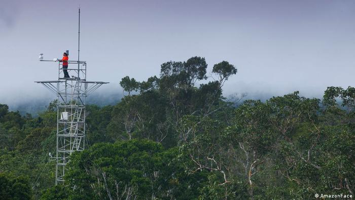 Torre do projeto Amazon-Face na Amazônia