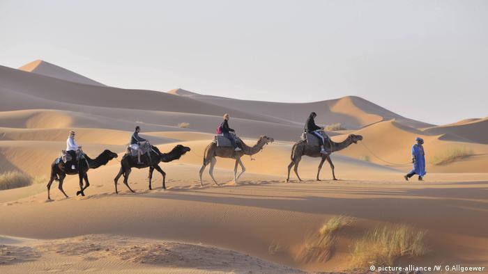 A caravan of dromedaries in a desert