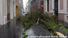 Árboles caidos en el casco antiguo de San Juan de Puerto Rico