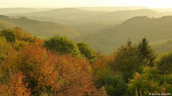 View over the forest in Germany's Rhineland-Palatinate region