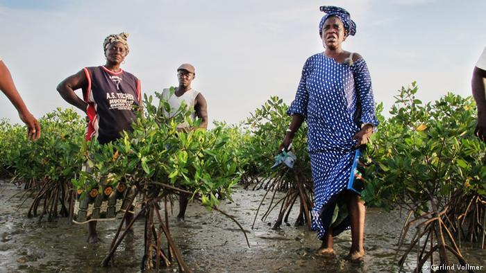 Globalideas Teaser – Mangrove restauration/ Senegal – ohne Logo