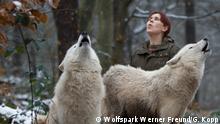 Deutschland Wolfsparks Werner Freund im Land Saarland