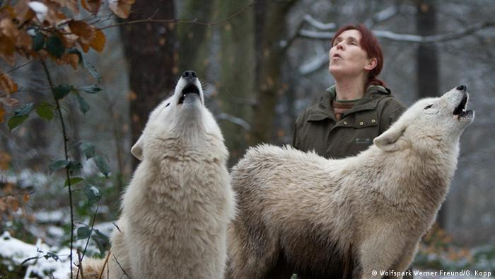 Tatjana Schneider howls in unison with the two Arctic wolves Inuit and Vilks