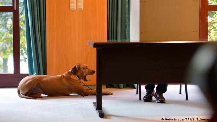 A dog yawns as its master casts his ballot at a polling station in Wuerselen near Aachen (Getty Images/AFP/S. Schuermann)