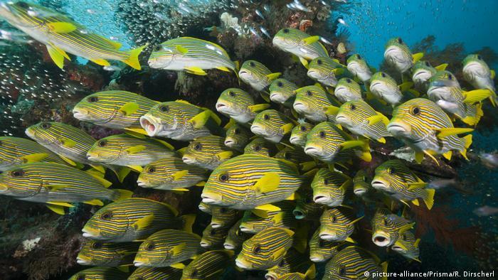 Indonesien Riff