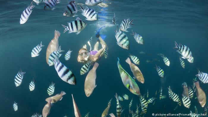 Indonesien Riff (picture-alliance/Prisma/R. Dirscherl)
