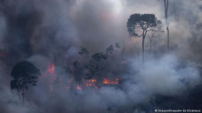 Brasilien Amazonas-Regenwald