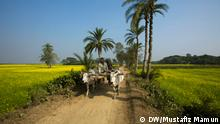 A man rides a bullock cart on the rural dirt path in Jessore, Bangladesh. A cow riddent vehicle used in rural Bangladesh for carrying goods and passangers where modern vehicles cant go.