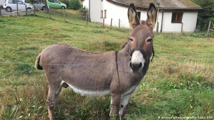 Donkey in a field in Hessen