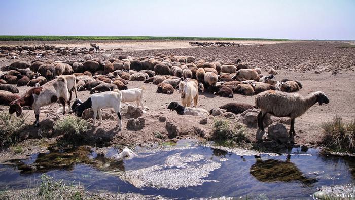 Iran - Landwirtschaft im Qazvin (Irna)